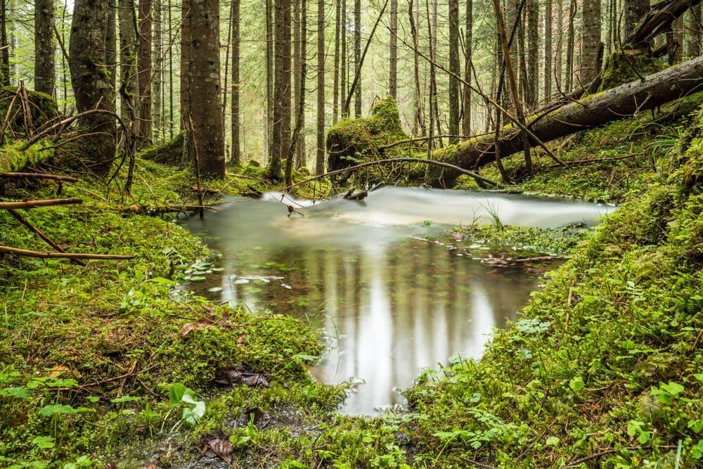 Karstquellen im Wald