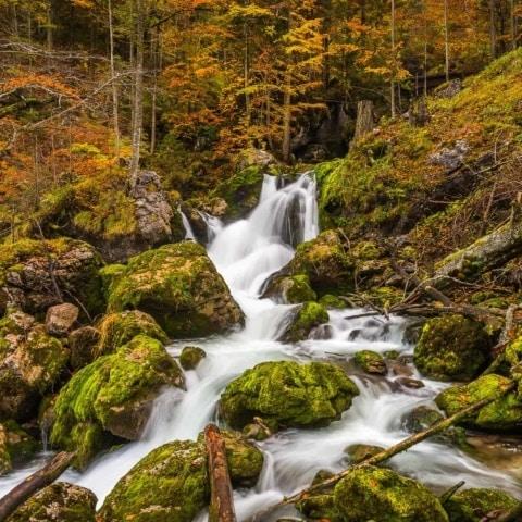 Der Hartelsgraben im Nationalpark Gesäuse zeigt sich im Herbst von seiner schönsten Seite